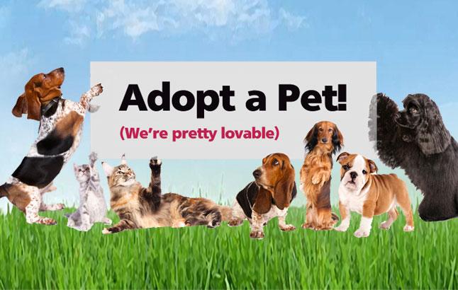 Tomorrow For Adoption A Dog