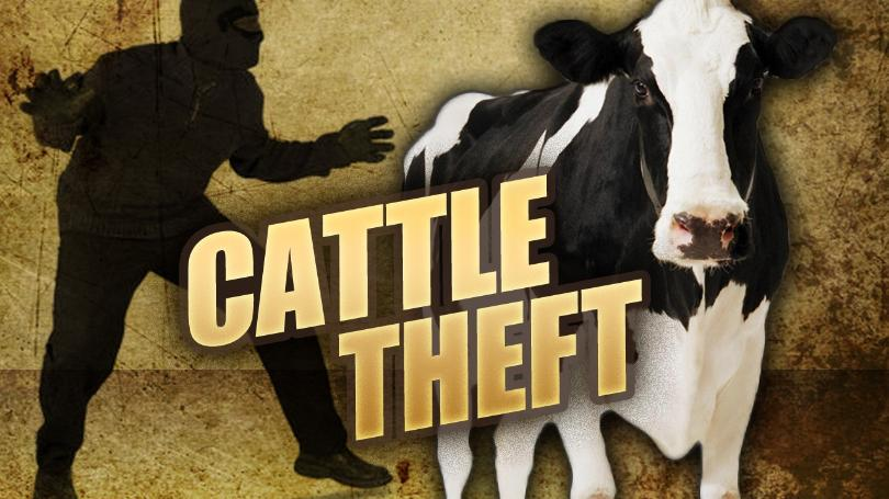 Cattle+Theft.mgn