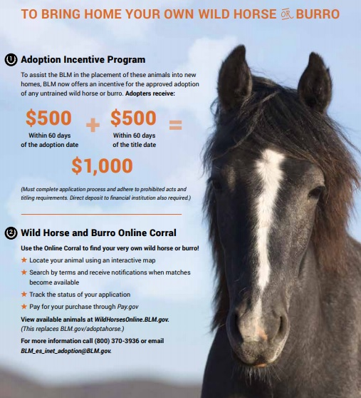 Adoptions Of Wild Horses – EastTexasRadio com
