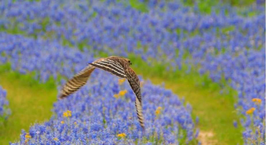 Texas State Parks Go Technicolor – EastTexasRadio com